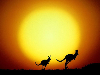 Kangaroos Silhouette Against The Setting Sun
